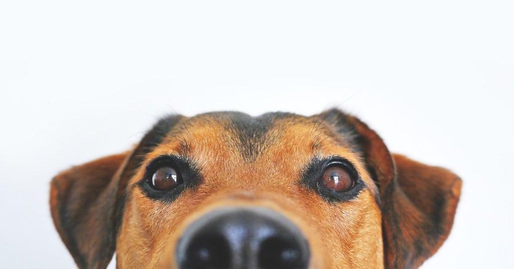 Kuono nuuskii: Saako marketista laadukkaita koiratarvikkeita?