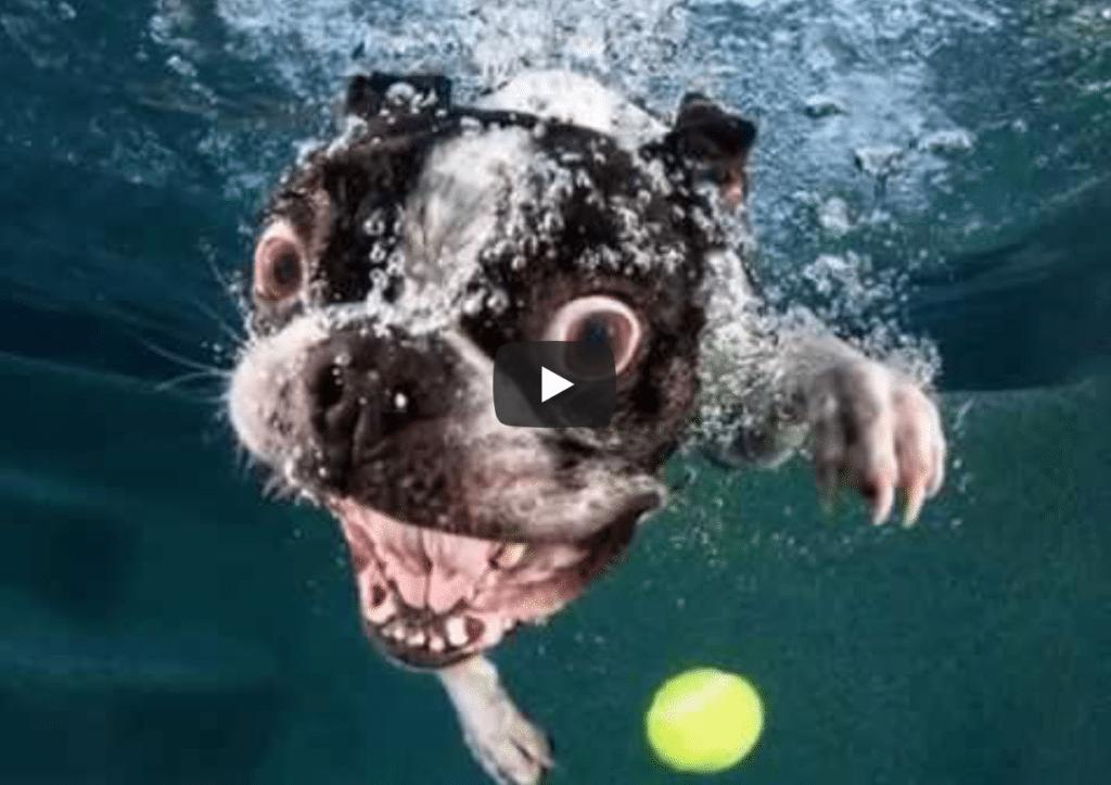 Koirien ilmeet ovat kuolemattomia –pallon noutoa veden alta hidastettuna, olkaapa hyvät