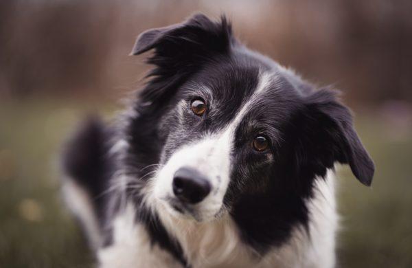 Koirien Nimipäiväkalenteri